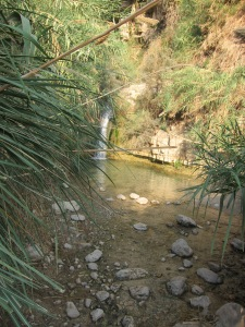 Ein Gedi Waterfall, Israel (Photo: T Brennen)